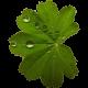 Christine Kurtz - Alltagsbegleitung & Gesundheitsberatung - Logo